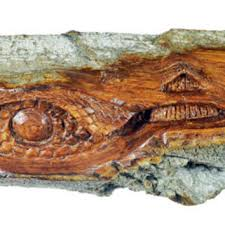 shop unique wood carved sculptures on wanelo
