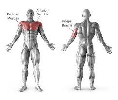 Incline Bench Muscle Group 28 Bench Press Muscles Panca Piana Presa Stretta Fitness