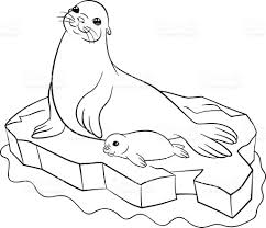 coloring pages mother seal with her little cute baby illustracion