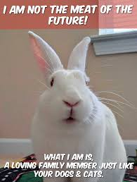 rabbit advocacy network fighting for rabbits u2026and all animals