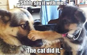 Funny German Shepherd Memes - 17 times german shepherd puppies proved they re the best