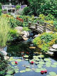 Pictures Of Backyard Ponds by Best 25 Lily Pond Ideas On Pinterest Water Lilies Lily Pad And