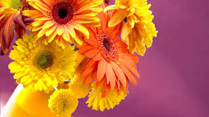 hd images of flowers 100 hd images of flowers widescreen macro flowers photo