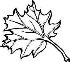 leaves coloring pages leaf color page leaf repulseweb net with