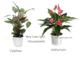 houseplants that need little light 14 top houseplants you should pick for very low light area tnc