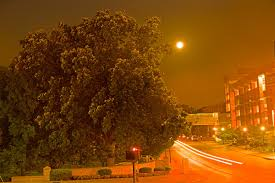 moonlight outdoor lighting street lights and tree growth venerable trees