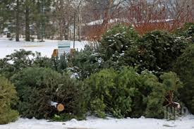 places to recycle your christmas tree in kamloops infonews ca