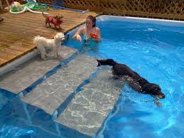 best 20 dog swimming pools ideas on pinterest diy dog yard