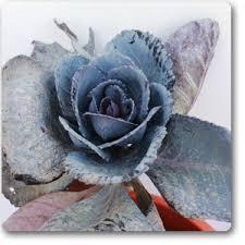 buy ornamental cabbage ornamental kale blue plant