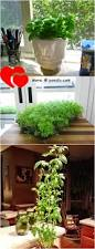 how to grow indoor herb garden diy table top herb gardenfrom an