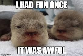 Sea Otter Meme - grumpy sea otter imgflip