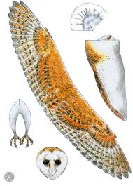 wildlife nature and barn owl crafts and easy fun activities for
