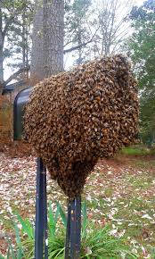 blog southeast bee removal