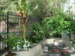 minimalist small tropical garden design not necessarily hardy in