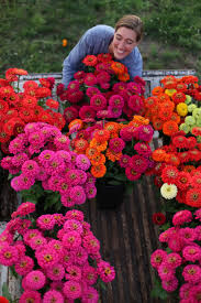 Cut Flower Garden by Growing Zinnias One Of My Favorite Summer Flowers They Make The
