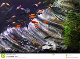 Aquarium Tropical Plants Fish Tank Stock Photo Image Of Pets Water Fishes Plants 36100080