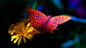 butterfly on flower pictures