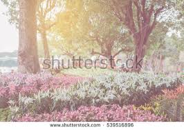 flower garden stock images royalty free images u0026 vectors
