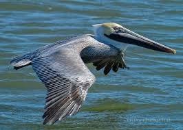 South Carolina birds images Photographing birds at murrells inlet south carolina jpg