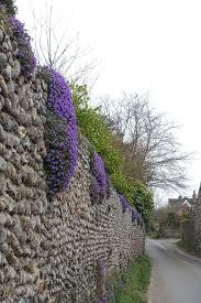 free images tree blossom flower purple wall blooming
