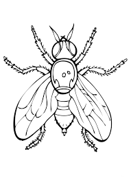 fruit fly picture animal hand drawn fly coloring pages