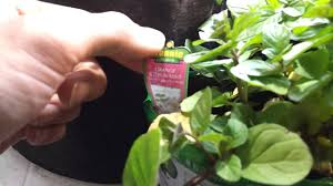 indoor herb garden indoor fruit and vegetable garden 3 14 13