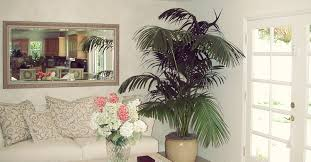 indoor plants tropical home designs sherman oaks landscape designer