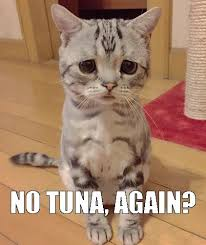 Sad Cat Memes - the sad cat meme he was offered an artichoke thus the sad look