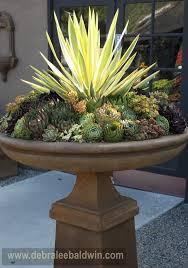 938 best succulents cacti images on succulents