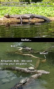 Alligator Meme - alligator party