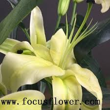 ornamental high quality real touch calla flower