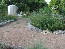 north texas native plants rainwater harvesting u0027soaking in u0027 as way to conserve texas u0027 water