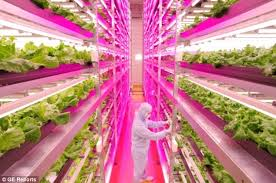 growing plants indoors with artificial light now that s a power plant indoor farm grows 10 000 heads of lettuce