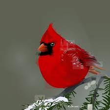cardinal marking paper illustration and fine art of joel wittlif