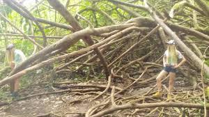cool trees cool trees picture of manoa falls honolulu tripadvisor