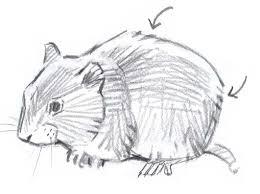 how to draw mammals john muir laws
