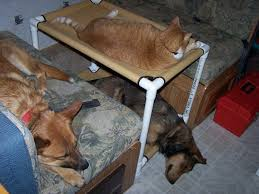Bunk Bed For Dogs Cat Bunk Beds Window Dogs Cots Cat Hammocks Cat Bed