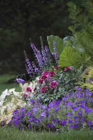 44 best flower bulb trends images on pinterest flower gardening