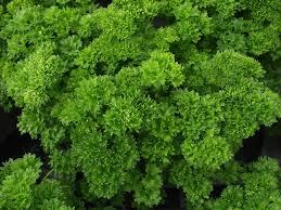 new vegetable varieties 2012 indiana yard and garden u2013 purdue