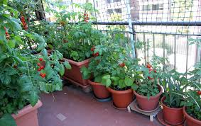 Types Of Vegetable Gardening by Urban Vegetable Gardening U2013 Bush Type Vegetables For Small Spaces