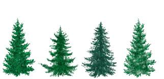 evergreen tree clip art clip art library