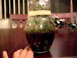 sealed worm terrarium youtube