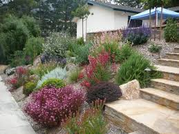 drought tolerant flowers southern california bing images