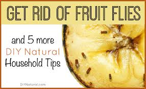 fruit flies in sink rid of fruit flies and 5 more diy natural home solutions