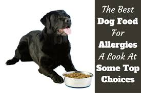 best dog food for allergies treatment starts from the inside