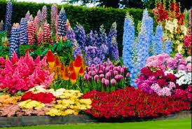 best perennial flower plants u0026 photos of garden perenni