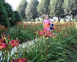 daylilies for sale shangri la daylilies mcminnville tn 37110