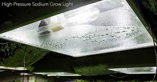 growing plants indoors with artificial light what you need to know for growing plants indoors under artificial light