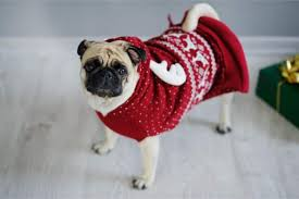 dog christmas best dog christmas sweaters 2018 argyle sweaters hoodies more
