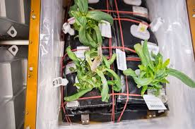 veggie activated to grow fresh plants on space station nasa